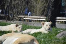 toronto-zoo-may-2016-0834